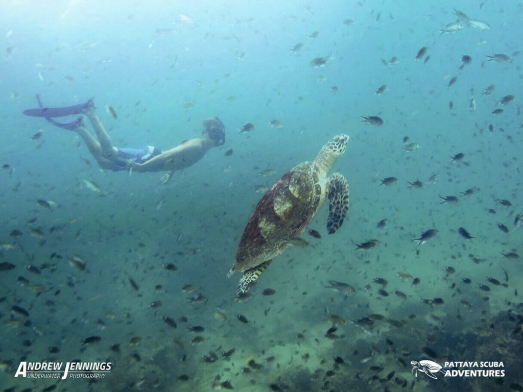 Freediving With Turtles Pattaya Thailand