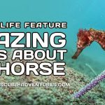 Amazing Facts About Seahorse